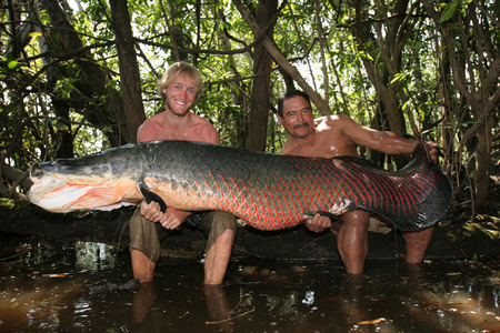Ikan besar disangka buaya «